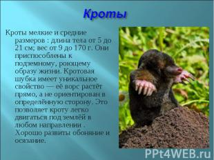 Кроты мелкие и средние размеров : длина тела от 5 до 21см; вес от 9 до 170