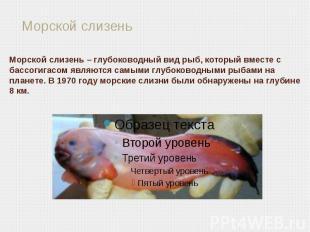 Морской слизень – глубоководный вид рыб, который вместе с бассогигасом являются