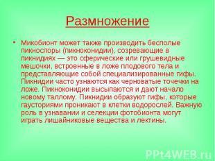 РазмножениеМикобионт может также производить бесполые пикноспоры (пикноконидии),