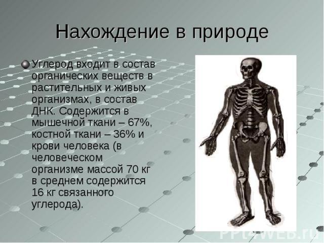 Углерод входит в состав органических веществ в растительных и живых организмах, в состав ДНК. Содержится в мышечной ткани – 67%, костной ткани – 36% и крови человека (в человеческом организме массой 70 кг в среднем содержится 16 кг связанного углеро…