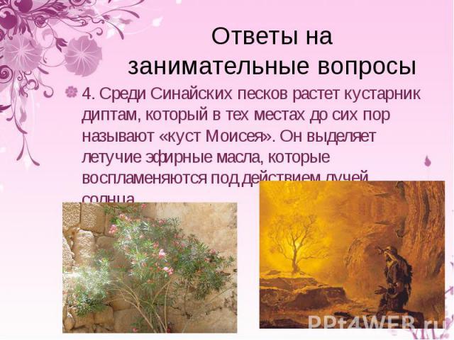 4. Среди Синайских песков растет кустарник диптам, который в тех местах до сих пор называют «куст Моисея». Он выделяет летучие эфирные масла, которые воспламеняются под действием лучей солнца. 4. Среди Синайских песков растет кустарник диптам, котор…