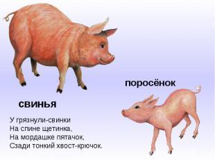 У грязнули-свинкиНа спине щетинка,На мордашке пятачок,Сзади тонкий хвост-крючок.