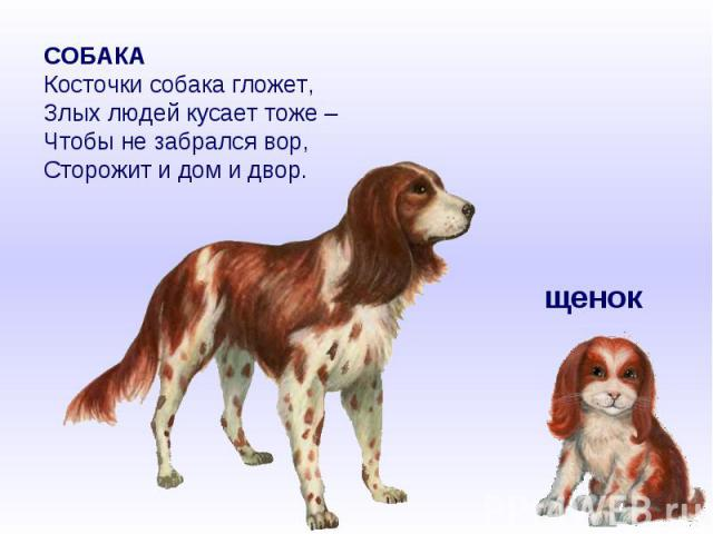 СОБАКАКосточки собака гложет,Злых людей кусает тоже –Чтобы не забрался вор,Сторожит и дом и двор.