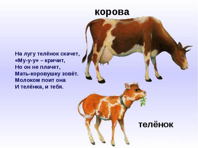 На лугу телёнок скачет,«Му-у-у» – кричит,Но он не плачет,Мать-коровушку зовёт.Молоком поит онаИ телёнка, и тебя.