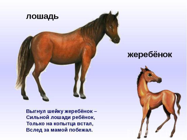 Выгнул шейку жеребёнок –Сильной лошади ребёнок,Только на копытца встал,Вслед за мамой побежал.