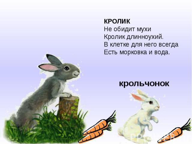 КРОЛИКНе обидит мухиКролик длинноухий.В клетке для него всегдаЕсть морковка и вода.