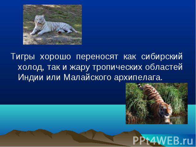 Тигры хорошо переносят как сибирский холод, так и жару тропических областей Индии или Малайского архипелага.