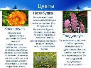 Цветы КалендулаОднолетнее прямостоячее растение 20-75 см высотой.Побеги толстые,
