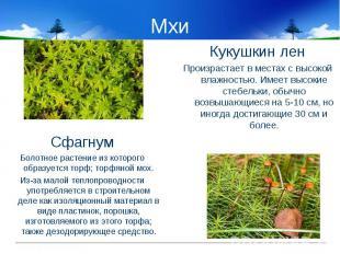 Мхи СфагнумБолотное растение из которого образуется торф; торфяной мох.Из-за мал