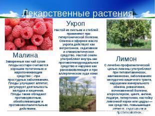 Лекарственные растения МалинаЗаваренные как чай сухие плоды исстари считаются хо