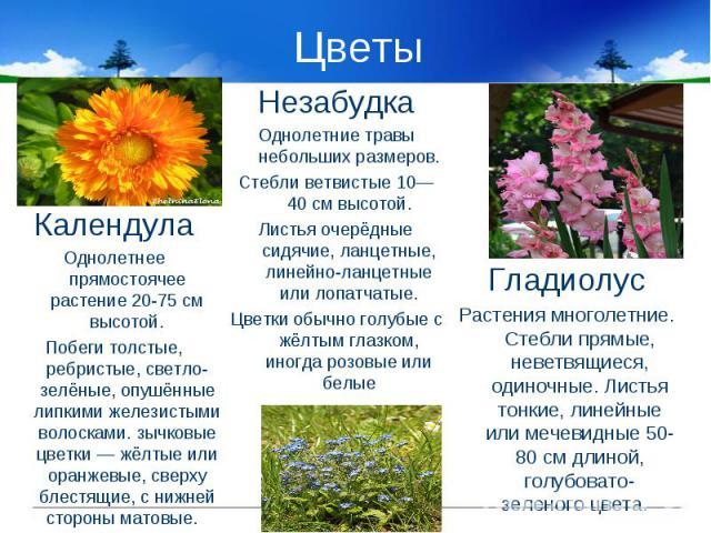 Цветы КалендулаОднолетнее прямостоячее растение 20-75 см высотой.Побеги толстые, ребристые, светло-зелёные, опушённые липкими железистыми волосками. зычковые цветки — жёлтые или оранжевые, сверху блестящие, с нижней стороны матовые. НезабудкаОднолет…