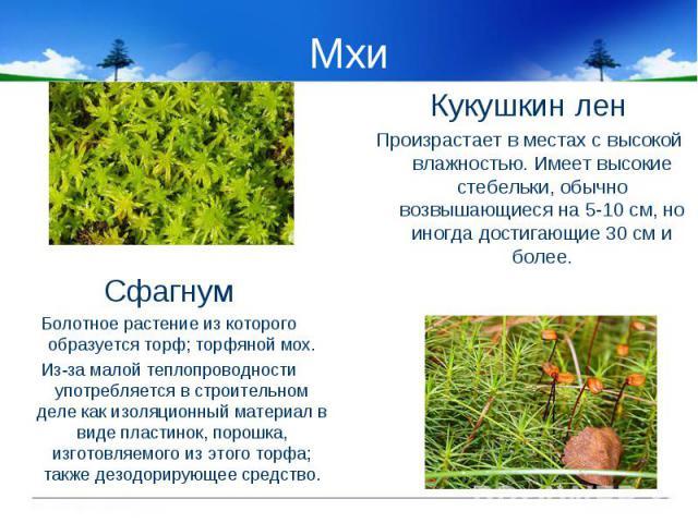 Мхи СфагнумБолотное растение из которого образуется торф; торфяной мох.Из-за малой теплопроводности употребляется в строительном деле как изоляционный материал в виде пластинок, порошка, изготовляемого из этого торфа; также дезодорирующее средство.К…