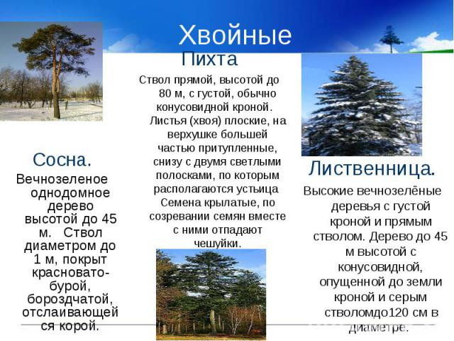 Хвойные Сосна.Вечнозеленое однодомное дерево высотой до 45 м. Ствол диаметром до 1 м, покрыт красновато-бурой, бороздчатой, отслаивающейся корой.ПихтаСтвол прямой, высотой до 80 м, с густой, обычно конусовидной кроной. Листья (хвоя) плоские, на верх…