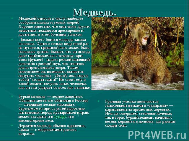 Окружающий мир доклад про медведей 3 класс