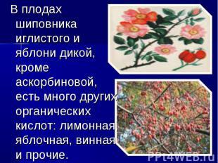 В плодах шиповника иглистого и яблони дикой, кроме аскорбиновой, есть много друг