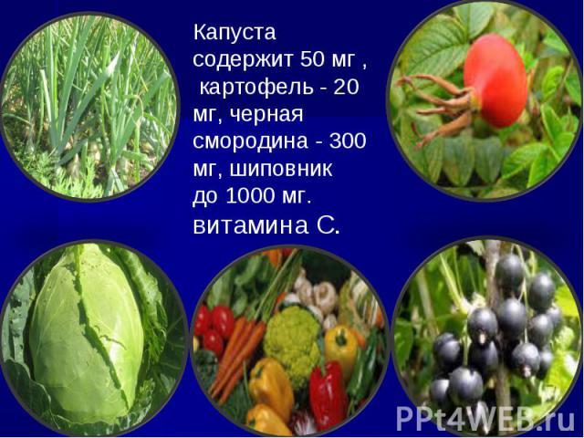 Капуста содержит 50 мг , картофель - 20 мг, черная смородина - 300 мг, шиповник до 1000 мг. витамина С.