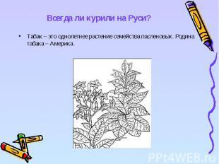Всегда ли курили на Руси? Табак – это однолетнее растение семейства пасленовых.