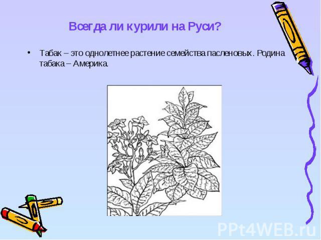 Всегда ли курили на Руси? Табак – это однолетнее растение семейства пасленовых. Родина табака – Америка.