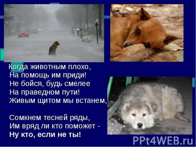 Когда животным плохо, На помощь им приди! Не бойся, будь смелее На праведном пути! Живым щитом мы встанем, Сомкнем тесней ряды, Им вряд ли кто поможет - Ну кто, если не ты!