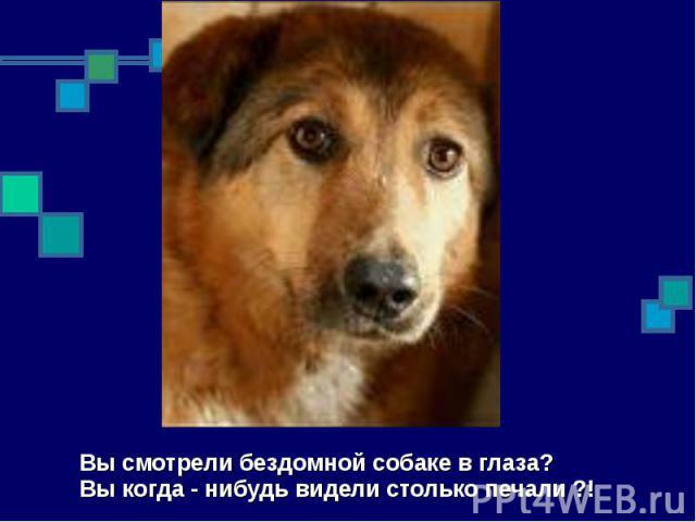 Вы смотрели бездомной собаке в глаза? Вы когда - нибудь видели столько печали ?!