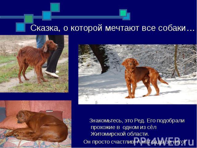 Сказка, о которой мечтают все собаки… Знакомьтесь, это Ред. Его подобрали прохожие в одном из сёл Житомирской области. Он просто счастлив! А мы рады за него!