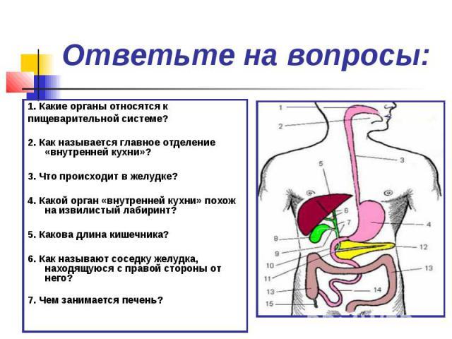 Ответьте на вопросы: 1. Какие органы относятся кпищеварительной системе?2. Как называется главное отделение «внутренней кухни»?3. Что происходит в желудке?4. Какой орган «внутренней кухни» похож на извилистый лабиринт?5. Какова длина кишечника?6. Ка…