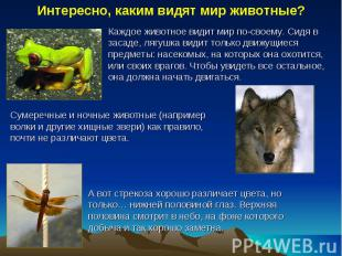 Интересно, каким видят мир животные? Каждое животное видит мир по-своему. Сидя в