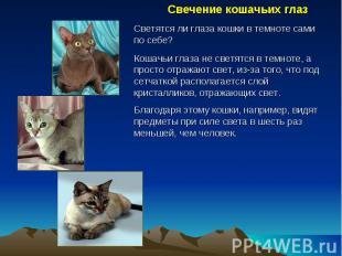Свечение кошачьих глаз Светятся ли глаза кошки в темноте сами по себе? Кошачьи г