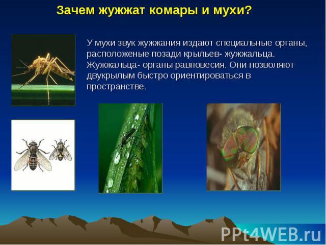 Зачем жужжат комары и мухи? У мухи звук жужжания издают специальные органы, расположеные позади крыльев- жужжальца. Жужжальца- органы равновесия. Они позволяют двукрылым быстро ориентироваться в пространстве.
