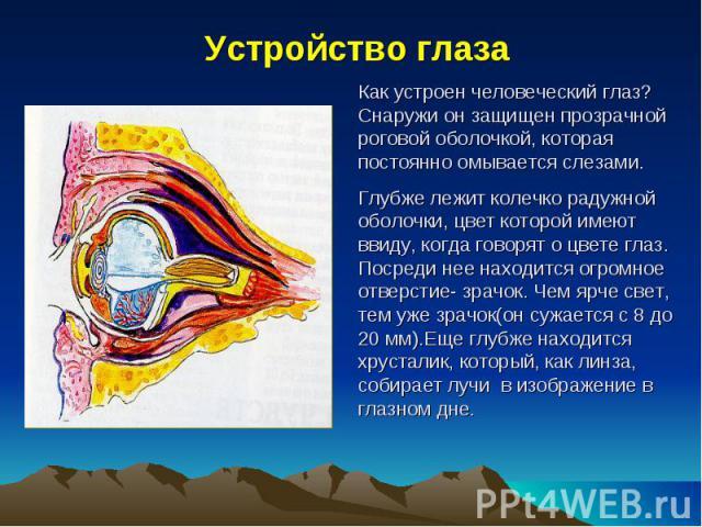 Устройство глаза Как устроен человеческий глаз? Снаружи он защищен прозрачной роговой оболочкой, которая постоянно омывается слезами. Глубже лежит колечко радужной оболочки, цвет которой имеют ввиду, когда говорят о цвете глаз. Посреди нее находится…