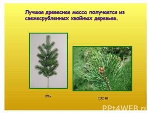 Лучшая древесная масса получается из свежесрубленных хвойных деревьев.