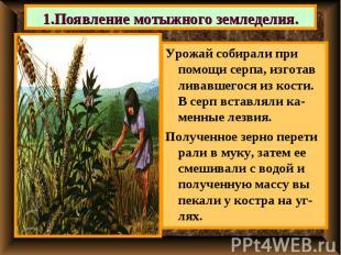 1.Появление мотыжного земледелия. Урожай собирали при помощи серпа, изготав лива