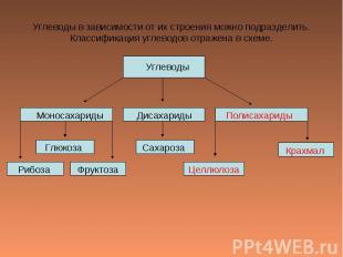 Углеводы в зависимости от их строения можно подразделить.Классификация углеводов