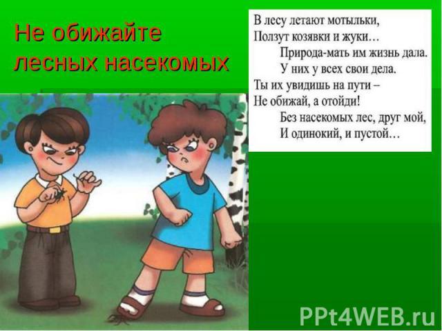 Не обижайте лесных насекомых