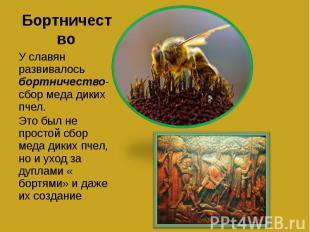 Бортничество У славян развивалось бортничество- сбор меда диких пчел.Это был не