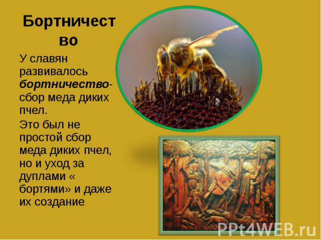Бортничество У славян развивалось бортничество- сбор меда диких пчел.Это был не простой сбор меда диких пчел, но и уход за дуплами « бортями» и даже их создание.