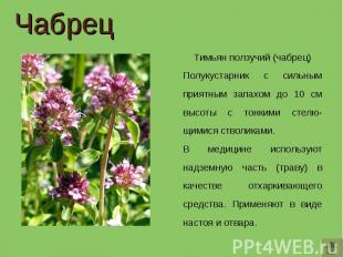 Чабрец Тимьян ползучий (чабрец)Полукустарник с сильным приятным запахом до 10 см