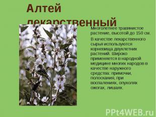 Алтей лекарственный Многолетнее травянистое растение, высотой до 150 см. В качес