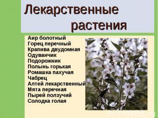 Лекарственные растения Аир болотныйГорец перечныйКрапива двудомнаяОдуванчикПодор