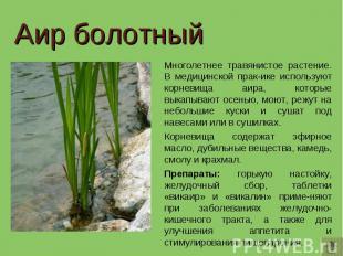Аир болотный Многолетнее травянистое растение. В медицинской прак-ике используют