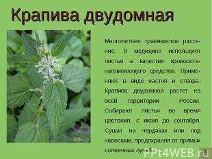 Крапива двудомная Многолетнее травянистое расте-ние. В медицине используют листь