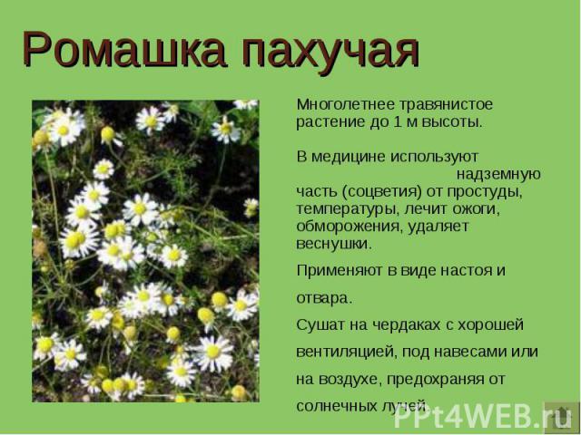 Ромашка пахучая Многолетнее травянистое растение до 1 м высоты. В медицине используют надземную часть (соцветия) от простуды, температуры, лечит ожоги, обморожения, удаляет веснушки.Применяют в виде настоя и отвара.Сушат на чердаках с хорошей вентил…