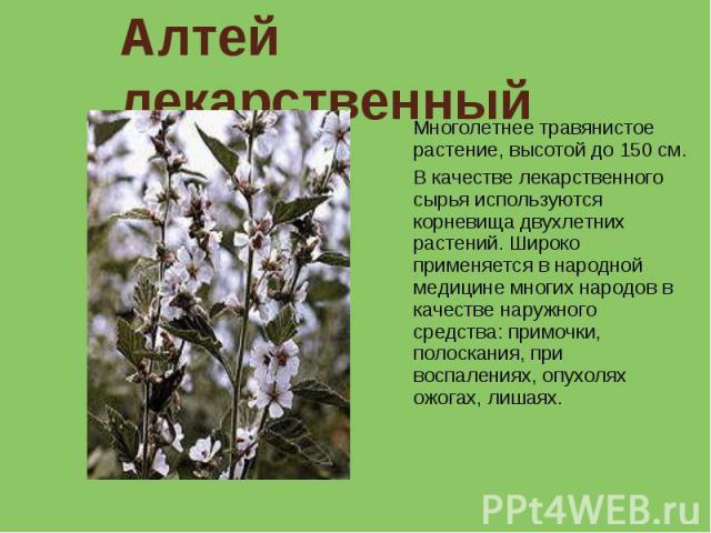 Алтей лекарственный Многолетнее травянистое растение, высотой до 150 см. В качестве лекарственного сырья используются корневища двухлетних растений. Широко применяется в народной медицине многих народов в качестве наружного средства: примочки, полос…