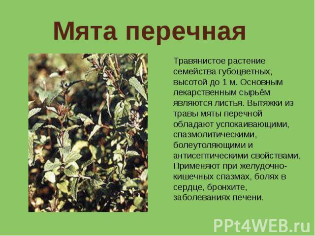 Мята перечная Травянистое растение семейства губоцветных, высотой до 1 м. Основным лекарственным сырьём являются листья. Вытяжки из травы мяты перечной обладают успокаивающими, спазмолитическими, болеутоляющими и антисептическими свойствами. Применя…