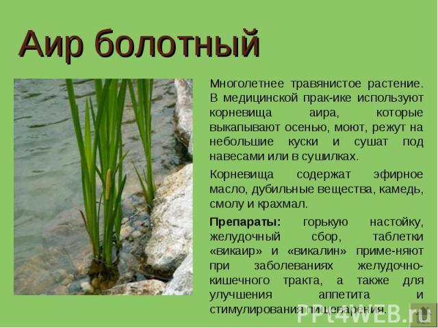 Аир болотный Многолетнее травянистое растение. В медицинской прак-ике используют корневища аира, которые выкапывают осенью, моют, режут на небольшие куски и сушат под навесами или в сушилках.Корневища содержат эфирное масло, дубильные вещества, каме…
