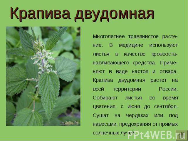 Крапива двудомная Многолетнее травянистое расте-ние. В медицине используют листья в качестве кровооста-навливающего средства. Приме-няют в виде настоя и отвара. Крапива двудомная растет на всей территории России. Собирают листья во время цветения, с…