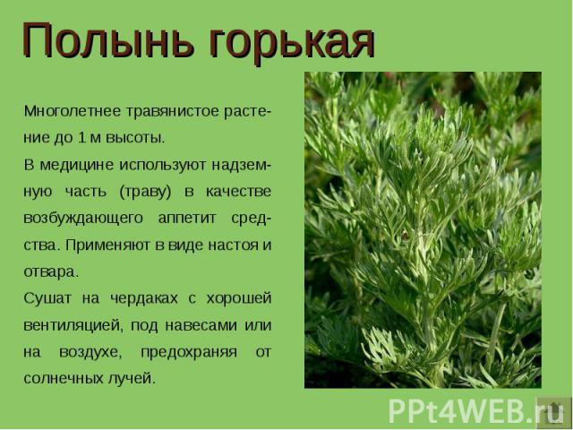 Полынь горькая Многолетнее травянистое расте-ние до 1 м высоты. В медицине используют надзем-ную часть (траву) в качестве возбуждающего аппетит сред-ства. Применяют в виде настоя и отвара.Сушат на чердаках с хорошей вентиляцией, под навесами или на …