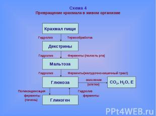Схема 4Превращение крахмала в живом организме Гидролиз Термообработка Гидролиз Ф