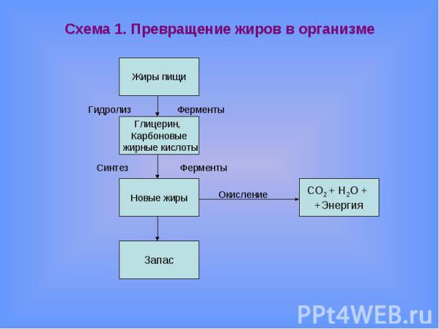 Схема 1. Превращение жиров в организме