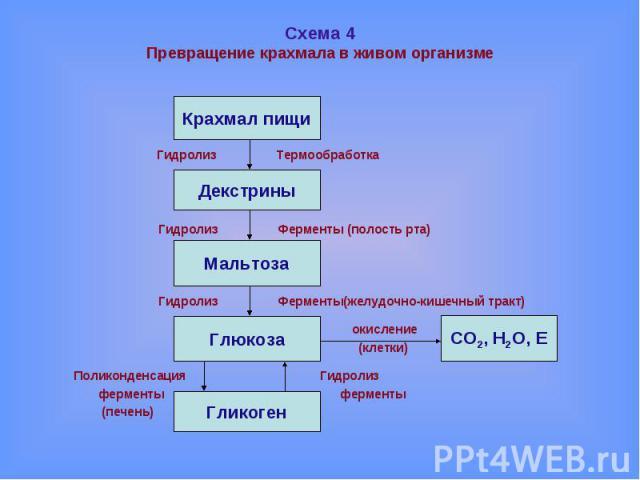 Схема 4Превращение крахмала в живом организме Гидролиз Термообработка Гидролиз Ферменты (полость рта) Гидролиз Ферменты(желудочно-кишечный тракт) окисление (клетки) Поликонденсация Гидролиз ферменты ферменты (печень)